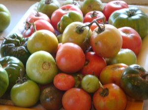 My favourite... tomatoes!